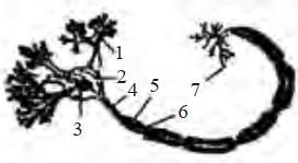Soal gambar sel saraf no 67