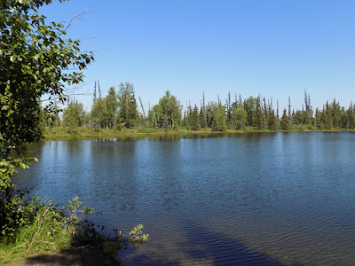 Secluded Pond Proved to be a Breeding Ground for Mosquitoes