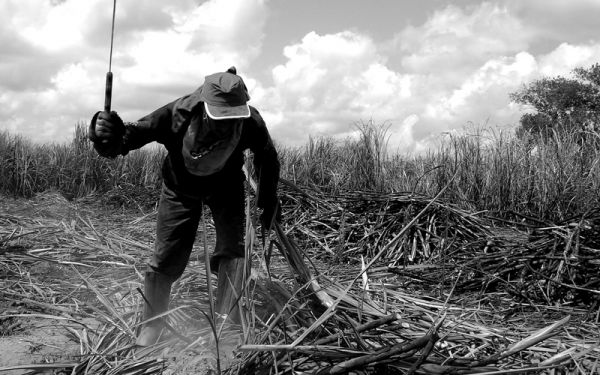 Ao ano, em média 37 cearenses são resgatados do trabalho escravo no Brasil