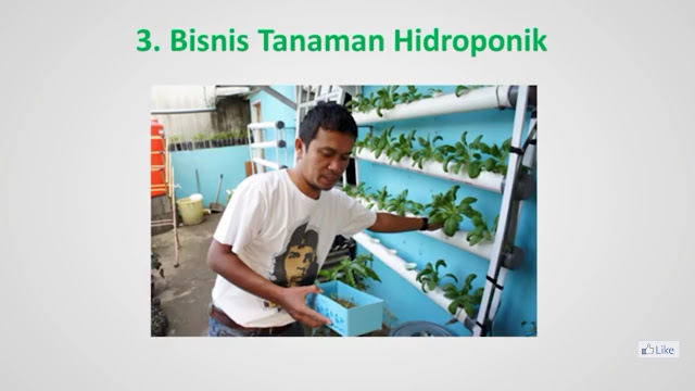 Bisnis Tanaman Hidroponik - 7 Peluang Usaha Ibu Rumah Tangga Yang Cocok Untuk Pemula