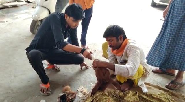 मानवता का दिया परिचय, घायल बछिया की सेवादारों ने की सेवा | Manavta ka diya parichay ghayal bachhiya ki sevadaro ne ki seva
