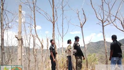 Kawasan Hutan Dirambah Secara Liar, BKPH MDM Bersurat Kepada Seluruh Kades dan Lurah