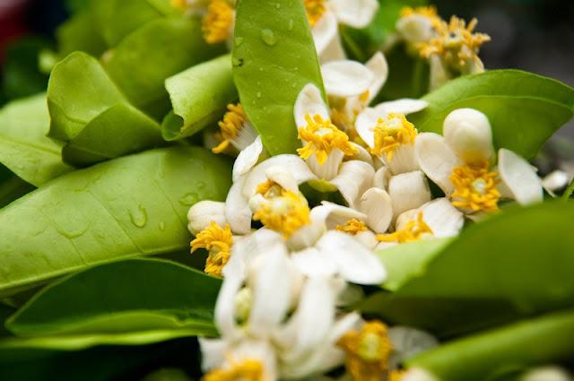 Cassava marinated grapefruit flowers- the interesting Culture Vietnamese food 2