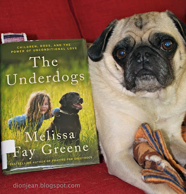Liam the pug posing with his book