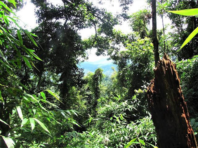 mountain jungle nam et phou louey national protected area laos