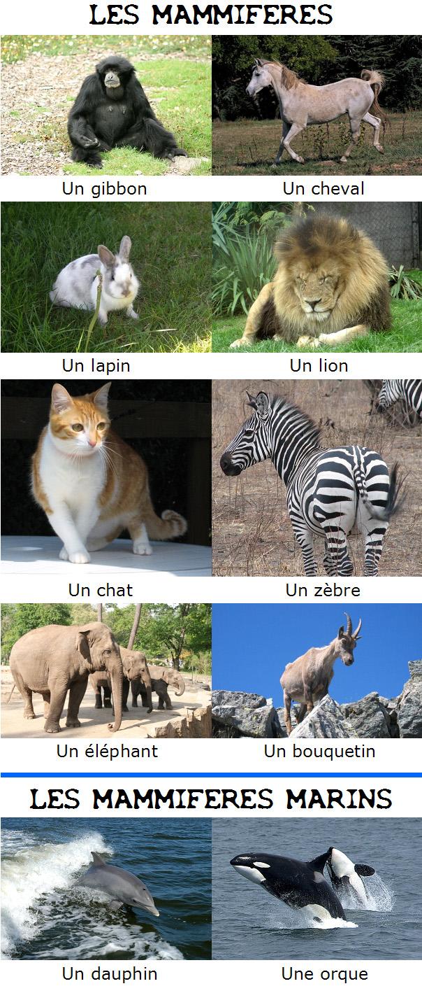 Zwierzęta - ssaki - Francuski przy kawie