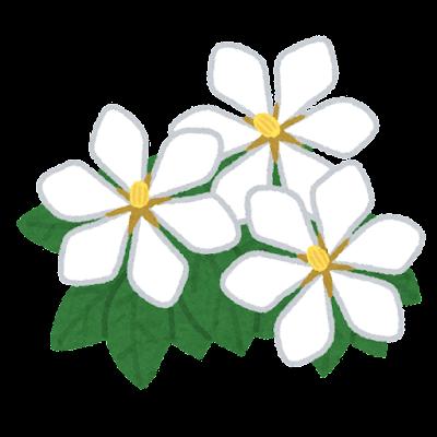 くちなしの花のイラスト