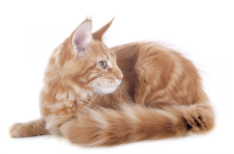 Here are the best types of domestic cats | cat and dogs