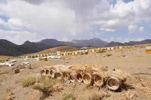 Σταθερή ανάπτυξη του κλάδου της μελισσοκομίας στο Ιράν