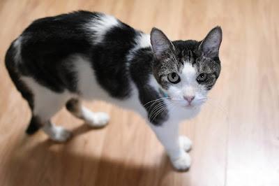 Kalaeloa Cat