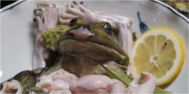 Katak sashimi