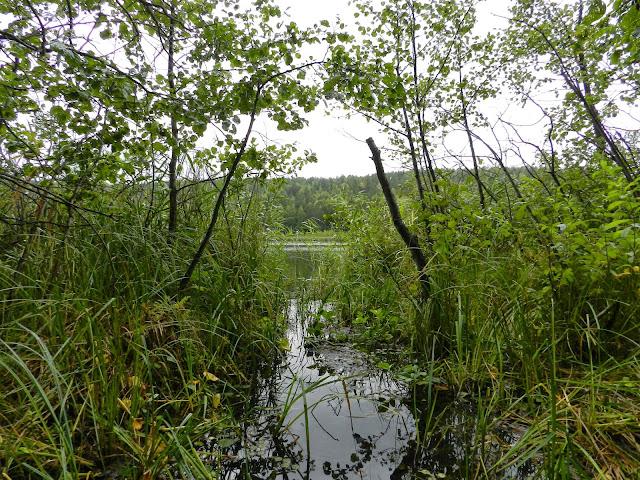 Заливчик между камышами на озере Шуворино