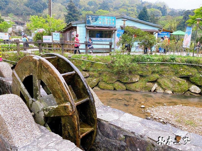 海芋大道|海芋賞花步道