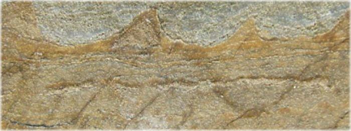 fósseis mais antigos de vida