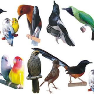 burung kicau lengkap