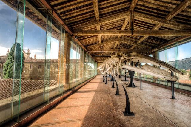 Esqueleto exposto no Museu de História Natural da Universidade de Pisa