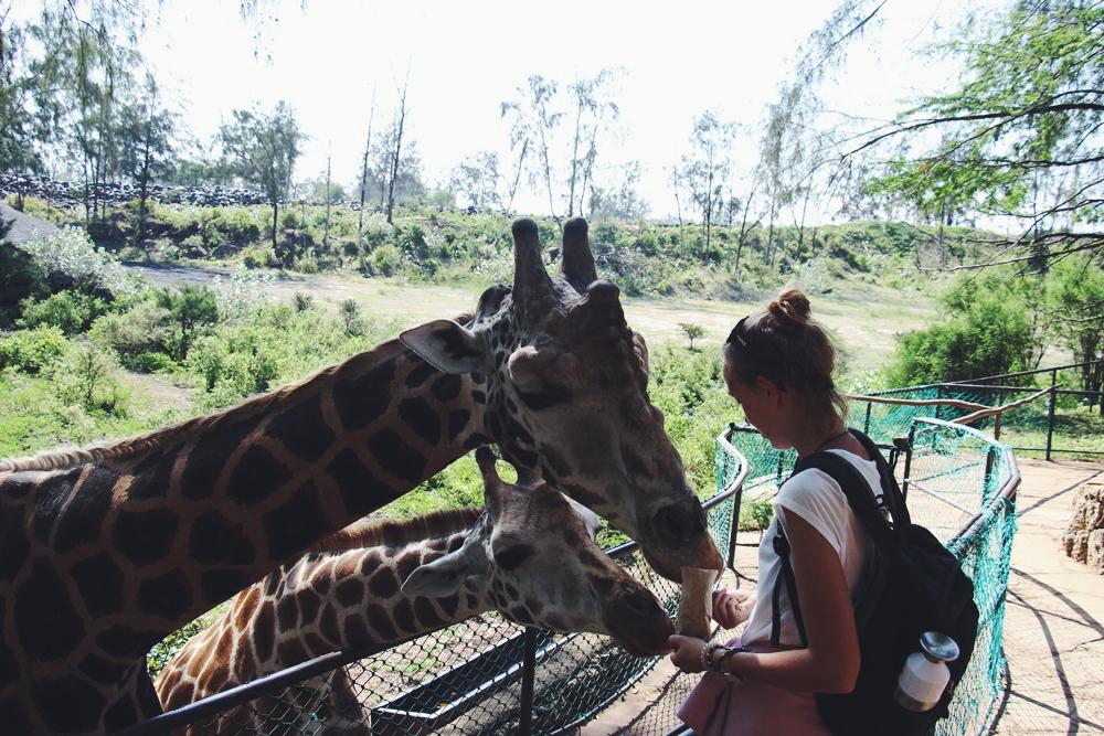 yvonne-karnath-haller-park-mombasa-kenya-kenia-reise-blog-travel