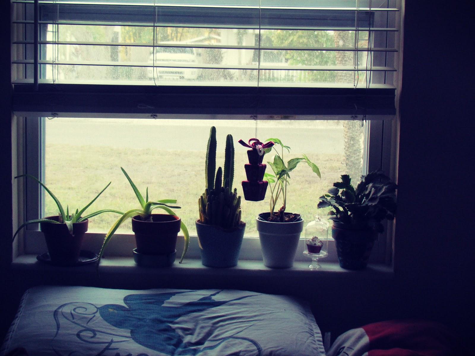 A windowsill plant garden in winter, Christmas cactus plant, aloe vera plant babies, desert rose cactus, nature-inspired home
