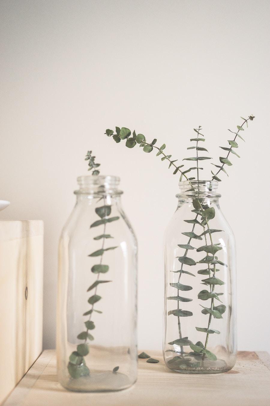 Ramas de eucalipto dentro de una botella de vidrio