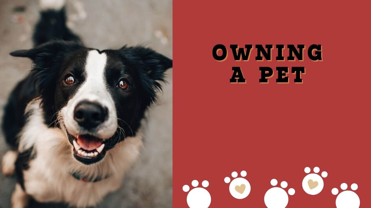 Owning a pet: What are the benefits of owning a pet?
