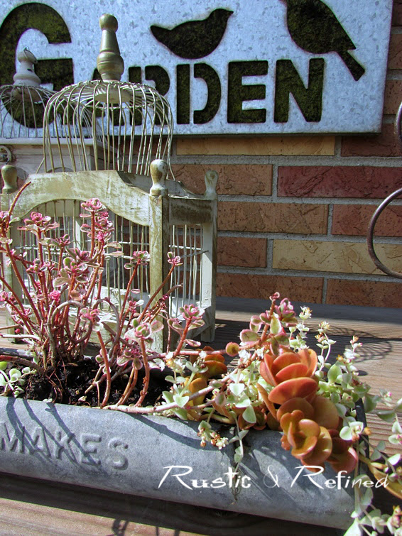 How To Care For And Winterize Succulents Rustic Refined