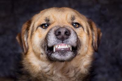 El perro dominante
