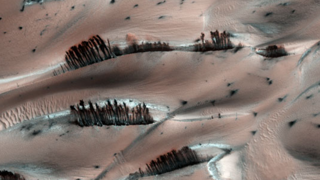 This is an image of a trees on Mars in NASA images.
