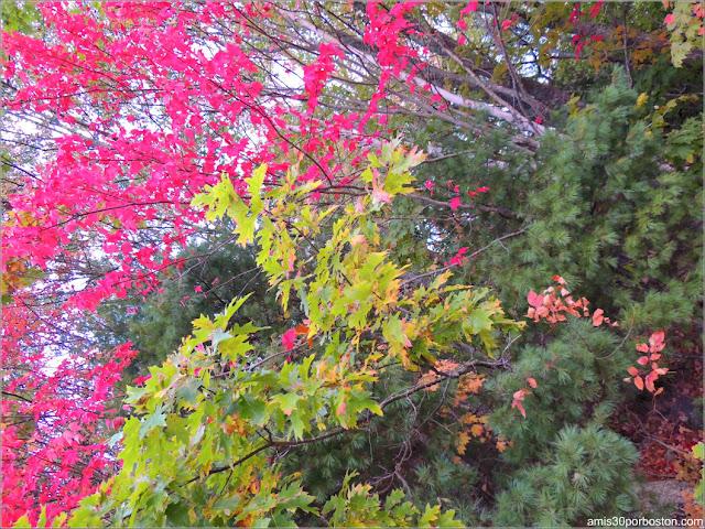 Color de las Hojas en Lakeside Cedar Cabins en Maine
