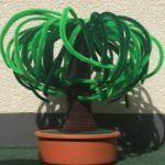 http://www.speckerna.de/pics/Muster/Beaucarnea_Plant.pdf