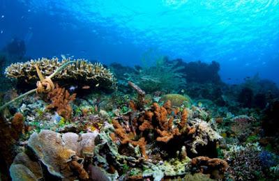 Taman Laut Taka Bonerate