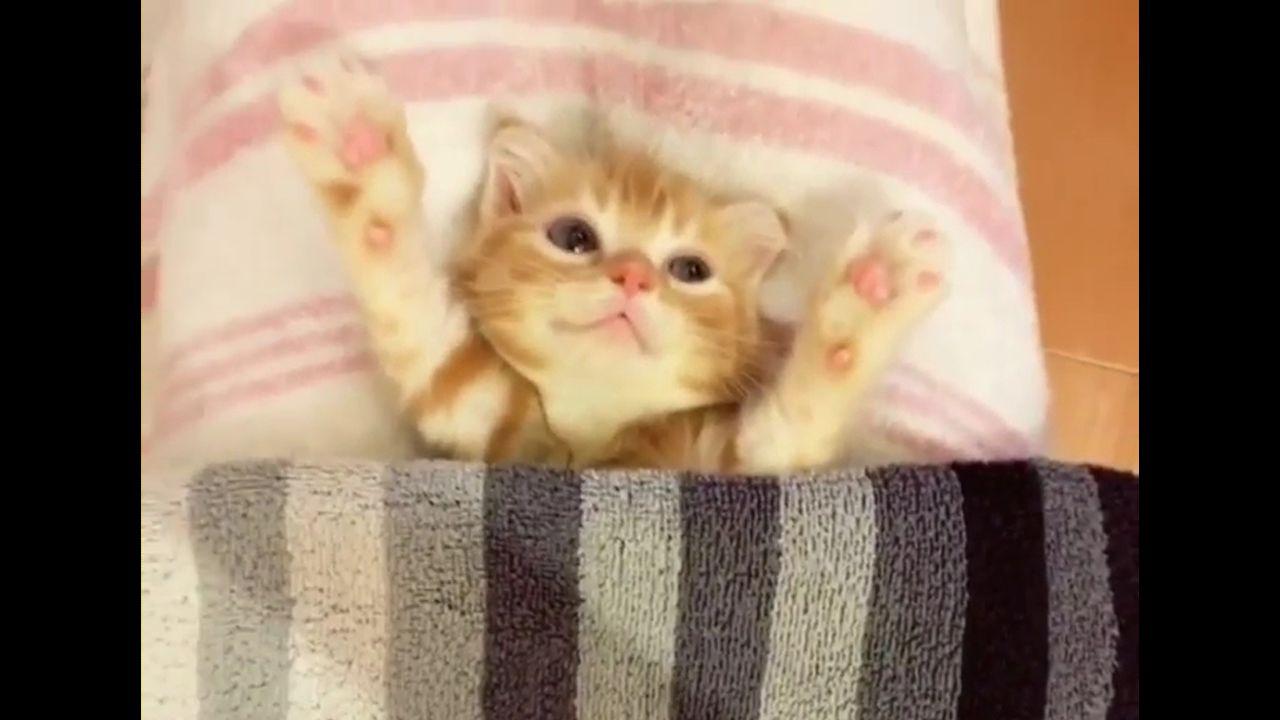 外国人「猫が可愛すぎてつらい」(海外の反応)