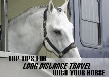 Top Tips for Long-Distance Travel With Your Horse