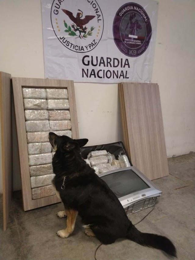 BINOMIOS CANINOS DE LA GUARDIA NACIONAL LOCALIZAN APARENTE MARIHUANA OCULTA EN TELEVISOR Y MUEBLES