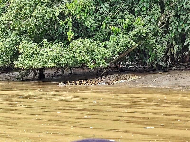 Myne Resort Bilit - Morning Cruise - Crocodile