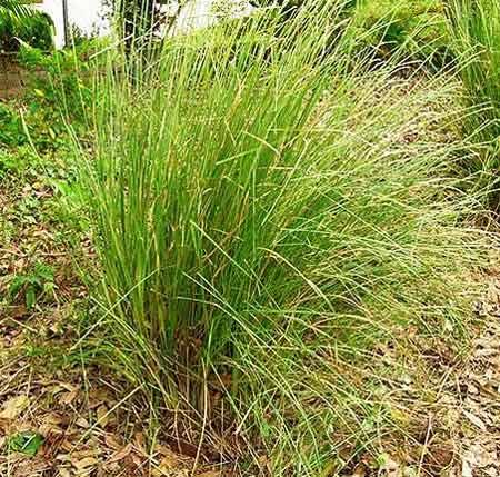 Story Kusha Grass Turning Blood Of Rishi Manakanaka Into Vegetable Juice