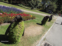 Penguin topiaries, Festival of Flowers - Christchuch Botanic Gardens, New Zealand