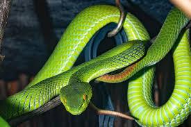 Snake images Download || Best snake image || Download image snake