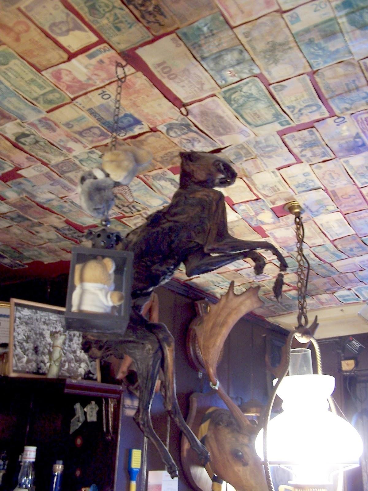 Matt Salusbury: West Suffolk mummified cat safari