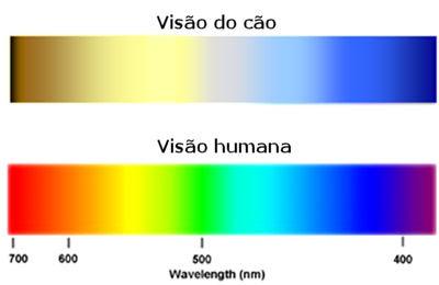 Não conseguem diferenciar as cores verde e vermelho. Portanto, se quiser  ensinar seu animal de estimação a buscar objetos no gramado, por exemplo,  ... bb2780305e