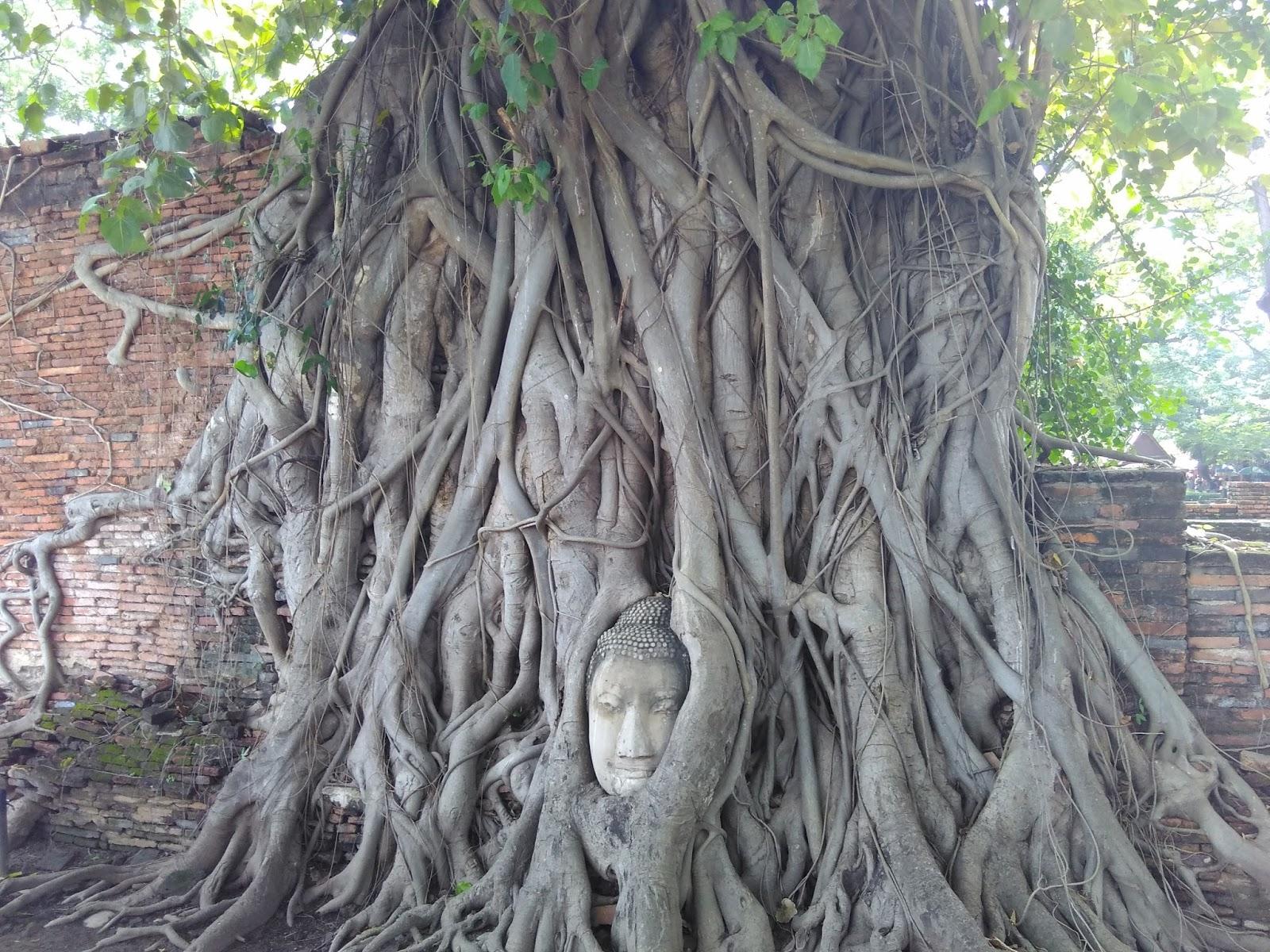 Cara de Buda na árvore