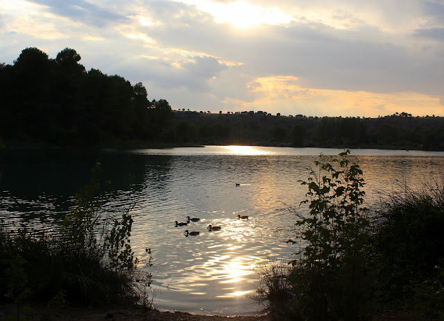 Atadecer en las lagunas de Ruidera. Patos en la laguna de Ruidera. Laguna Redondilla