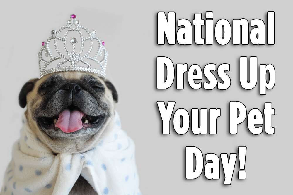 National Dress Up Your Pet Day Wishes Pics