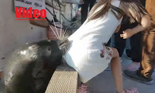 http://greece-salonika.blogspot.com/2017/05/video_22.html
