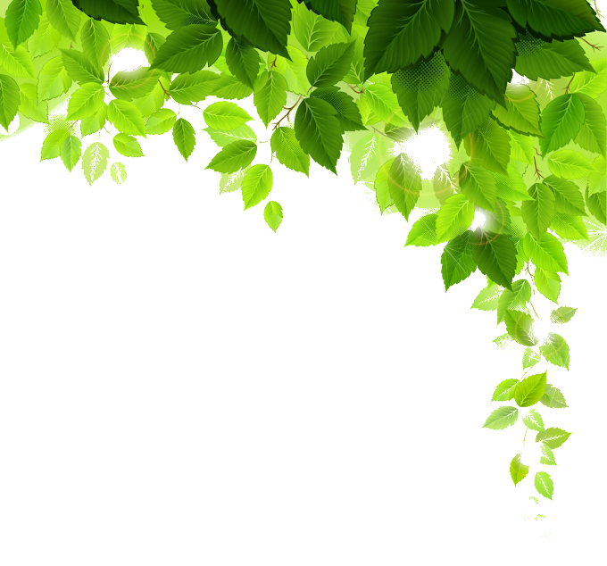 Plant Desktop Tree, green leaves, leaf, branch, computer Wallpaper png free png