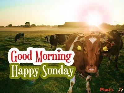 good-morning-sunday-images-sunday-wishes-happy-sunday-photos-pics-Greetings-10