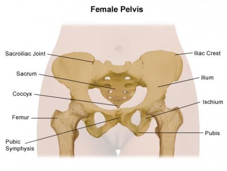 Image result for tulang pelvis wanita