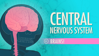 Brain and Nervous System Information Center