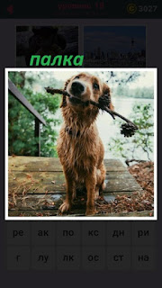 на ступеньках сидит собака и в пасти держит палку