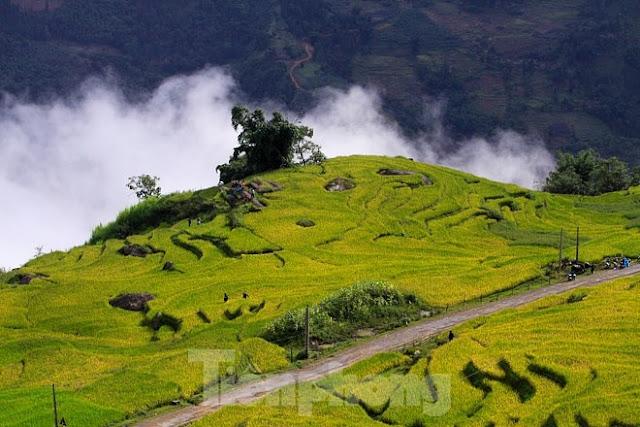 Ngắm cảnh sắc 'thiên đường' ruộng bậc thang hùng vĩ ở Y Tý Lào Cai 2
