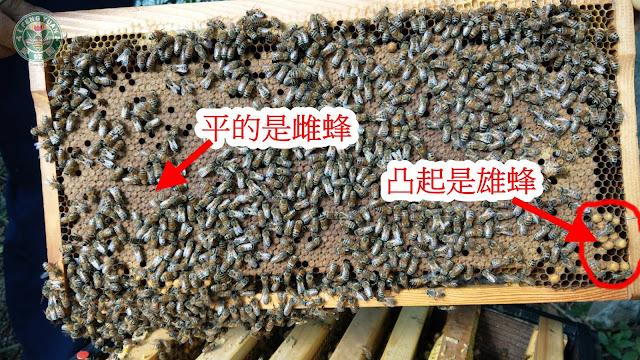 蜂巢的樣子@愛蜂園,台灣養蜂場,健康伴手禮,天然蜂蜜,蜂花粉,蜂蜜醋,蜂蜜蛋糕,蜂王乳,蜂王漿,台灣養蜂協會會員,客製化禮盒,台灣蜂蜜,純蜂蜜,蜂蜜檸檬,產品經SGS檢驗合格,